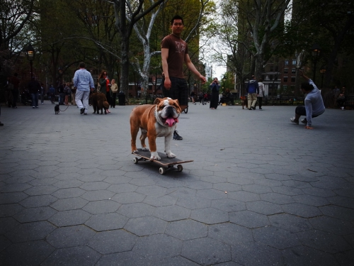 Dog is a much better skater than I.