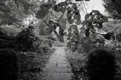 Entrance to the secret garden