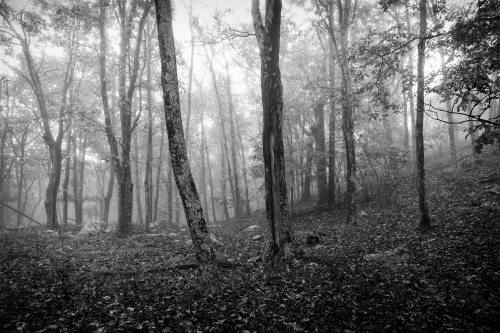 The Mist in the forest at Shenandoah National Park.