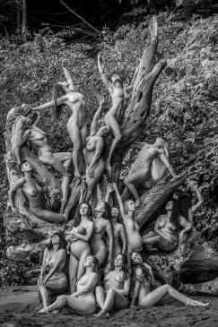 Vince Hemingson's Tree of Life